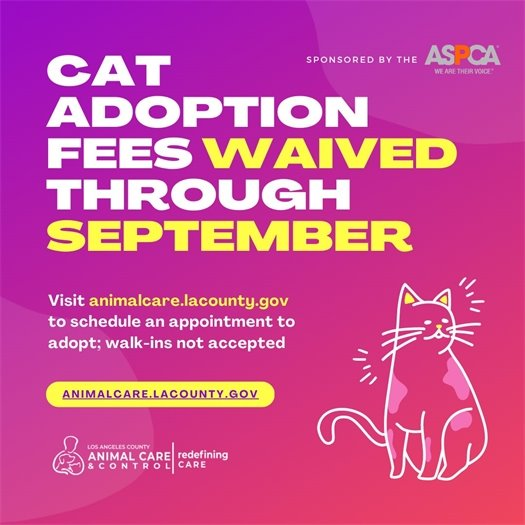 Cat Adoption Fees
