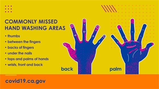 Commonly Missed Hand Washing Areas