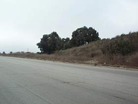 Stretch of road and hillside with sparse trees