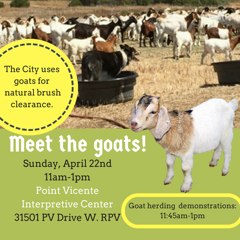 Meet the goats!